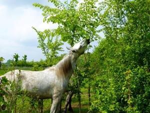 Paard en landschap
