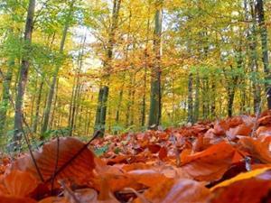 Steunpunt bos